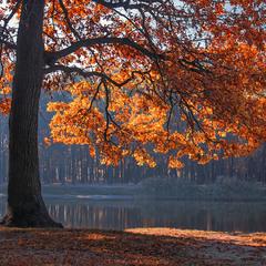 Зранку дуб загорівся: туман розступився й жахнуло сонце.