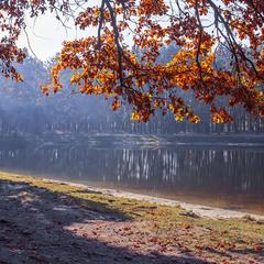 Світло над озером і дубове листя оце.