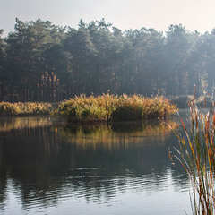 А зранку острів закоханих качок тоне у млосній імлі - і все спочиває. Качки також.