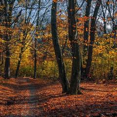 В лісі під вечір. Листя опадає - осінь, і неба видно все більше й більше.
