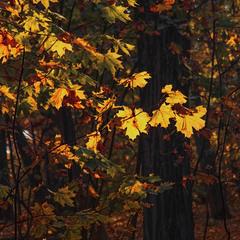 Немаю цьому ради - життя минає, і листя пожовкне і опаде.