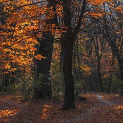 В Голосіївському лісі ще трапляються дерева часу.