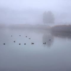 В тумані переміщатися означає перебирати швидко лапками.