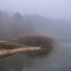 За туманом нічого не видно. Тільки видно дуба зеленого.