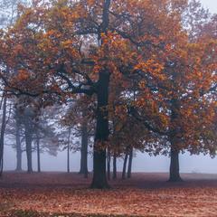 В тумані воно якось і легше думається, і спокійніше мріється буває. А буває - і час завмирає.