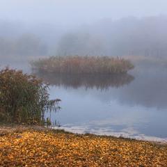 На острові замріяних качок рано вранці панує туманний спокій.
