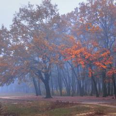 Туманні походеньки, туманні перспективи, туманна осінь були. Скоро - весна.