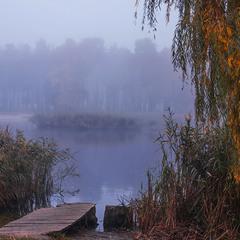 Вогко і волого на острові закоханок качок - туман висить.