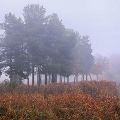 В тумані зелений острів Є!