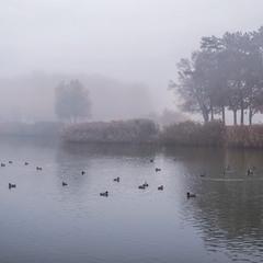 Теплий ранок в тумані, Плюск із води – Качки плавають тихо й нетихо.