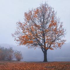 Коли рухаєшся Великим Небесним Колом, не завжди помічаєш чи листя зелене, чи червоне, чи воно є.
