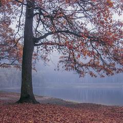В тумані життя рухається  та й рухається.