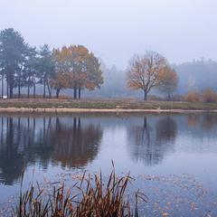 Над сталевим озером знялися злиє чайки допїеру.
