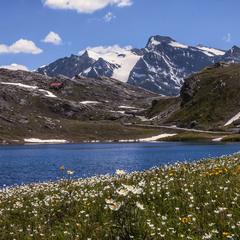 На березі гірського озера квітки проізростають.