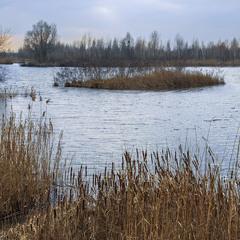 Острівець свідомості посеред лютого лютневого озера. Очерет, рогіз, осика, верба, береза і всі-всі.