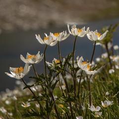 Квіти на березі озера.