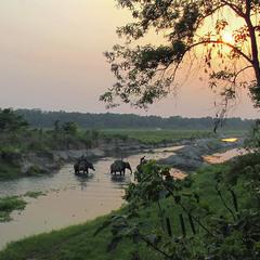 Річка й слони увечері. Джунглі.