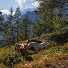 Зелений лужок, спокійну кобилу, табунець веселих жеребенят -  що ще треба, щоб зустріти старість?