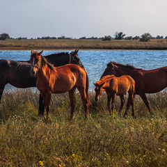 На березі озера коники, - сім'я, певно, - оце надвечір по коліна  в траві походжають.