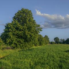 Біля землі воно якось спокійніше жити буває. Біля ярини увечері після дощу.