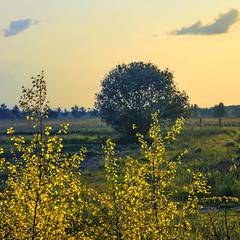 Поля за селом заростають лісом.