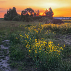 У полях край села пізно увечірі, коли сонце вже майже сховалося за Великий Ліс.