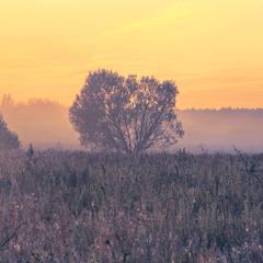 У полях - воно такеє, - спокою немає в тумані.