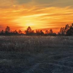 Сонце сумно ховалося за небокрай, покинуті неорані поля в бур'яні, дикі чагарники, дорогу в нікуди.