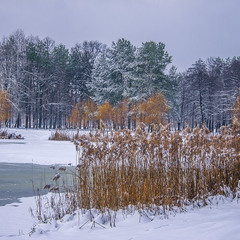 Ти диви - яка кольорова зима буває після снігу під вечір: і синя, і зелена, і біла, і - жовта!