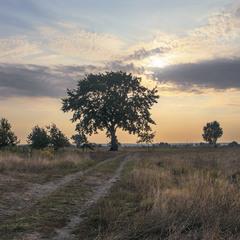 Стрінеш, бувало, посеред лугів Дерево Часу - і аж зрадієш.