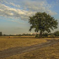 Дорога до твого села  осьо-о пробігає. Дуб не поспішає жовтіти -  щось знає?
