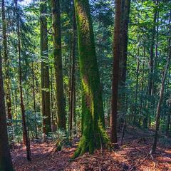 Мох. Навіть в спеку в гірському лісі прохолодно. А в дощ і туман - волого. Ось і мох береться.