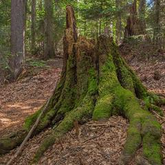 Порости мохом, а потім дуба дать - достойне закінчення лісової епопеї. Двоє нас було.