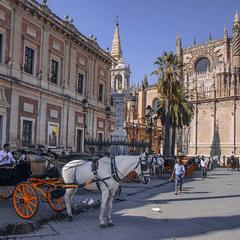 В середмісті Севільї біля катедрального собору коник в очікуванні роботи перепочиває.