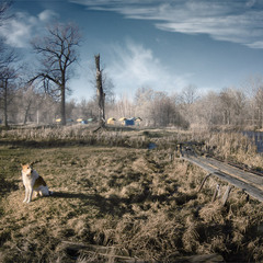 Пейзаж с собачкой