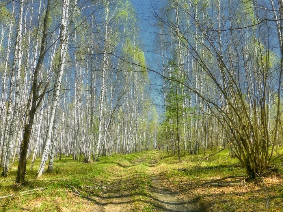 Картинки лес весной для детей