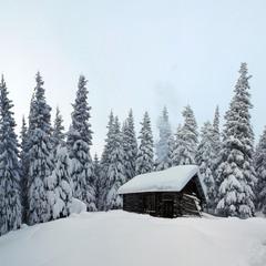 В сніговому полоні
