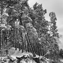 Зимний лес (3)