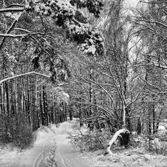 Зимний лес (2)