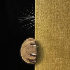 Про стеснительного кота...