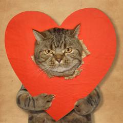 Кто тут котиков не любит...? :)