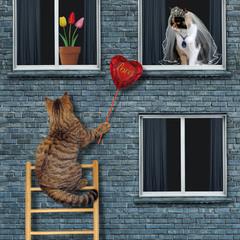 Про кохання...