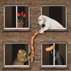 Коли тобі пощастило з сусідами ...