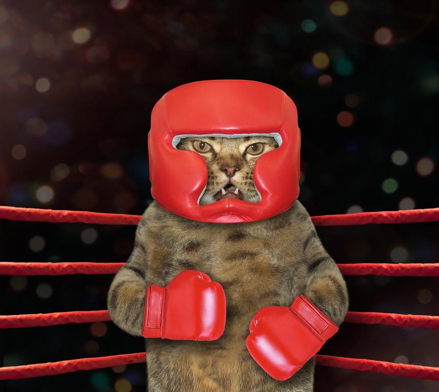 картинка коты боксируют