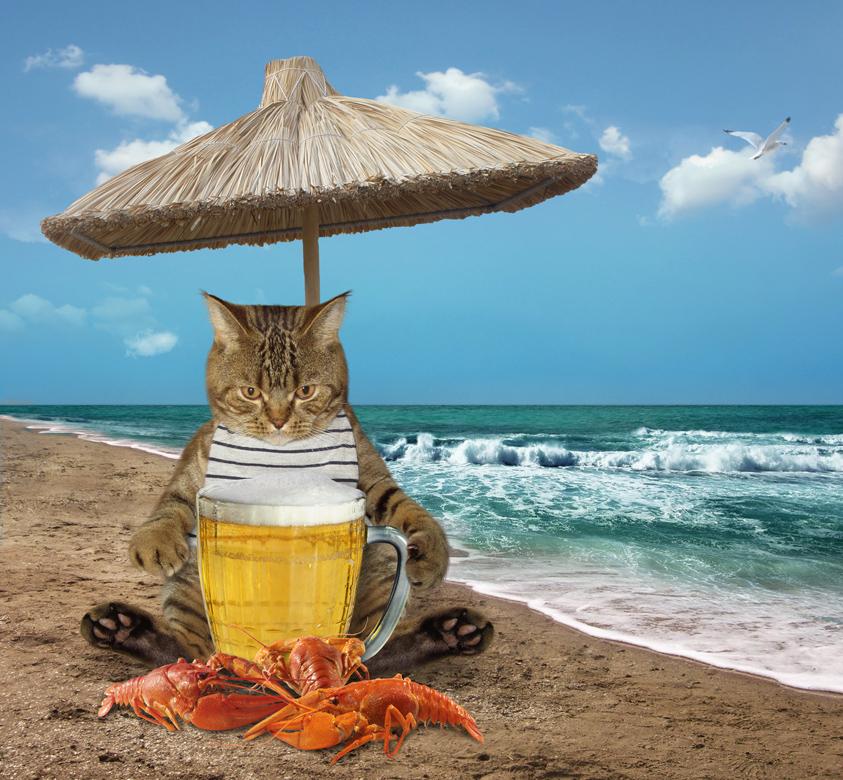Кот на пляже смешные картинки