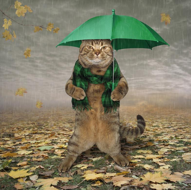 Картинки приколы, прикольные картинки с надписями про осень и дождь