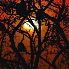 6 ворон спостерігають за сходом Сонця холодним туманним ранком, приблизно о 7.30