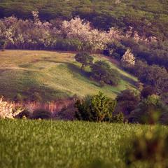 Весняний пагорб