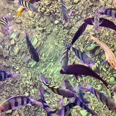 Рыбки Красного моря