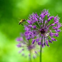 Bee Maya :)